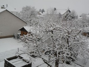 Unser Garten Ende Januar 2012